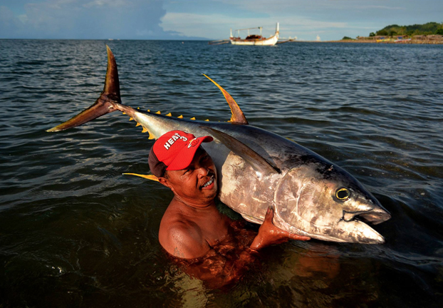 The most sought-after fish in Bicol's Lagonoy Gulf is the Yellowfin Tuna. A fisher shows off a handsome 39-kilogramme fish. Two decades ago, fishers caught a 196-kilogramme Yellowfin - the largest caught in the Gulf. Classified by the International Union for the Conservation of Nature (IUCN) as near threatened, Yellowfin Tuna sport metallic blue backs, golden flanks and a silver belly. Sickle-shaped dorsal and anal fins, hued bright yellow, grant them their name.  They form schools with other tuna species and sometimes with dolphins. While most fish have white flesh, tuna tissue hosts loads of myoglobin, which efficiently oxygenates their systems to give tuna meat a distinctive red hue and mouth-watering texture. This is why they're so highly sought after. WWF works to conserve tuna stocks in the Philippines through its Partnership Programme Towards Sustainable Tuna (PPTST) project.  PHOTO COURTESY OF WWF-PHILIPPINES